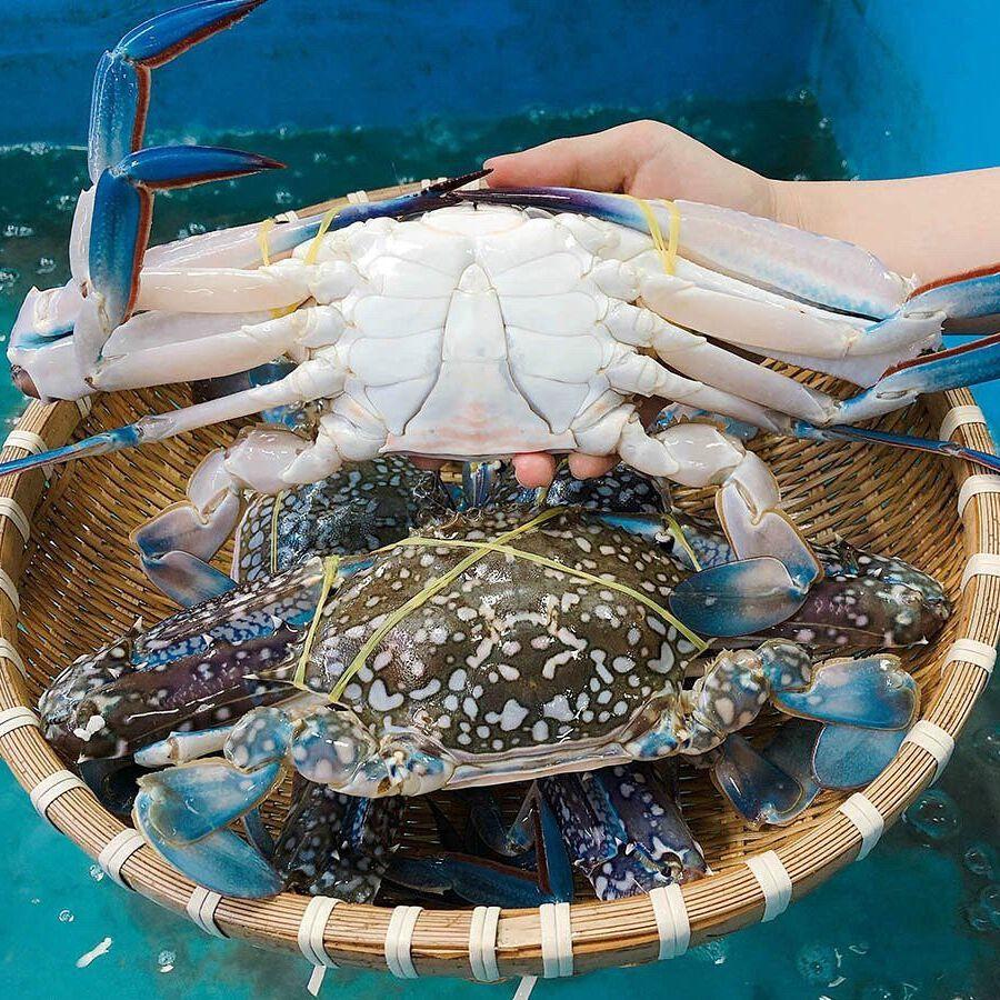 Hải sản tươi sống ở Quảng Bình